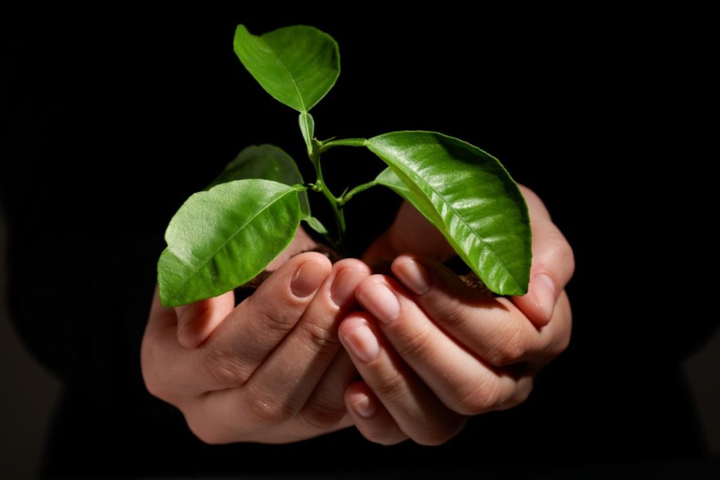 Cupped hands holding a small plant